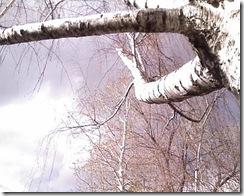birch w storm 2 3-19-09