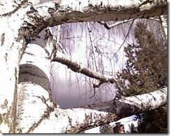 birch w storm 3-19-09